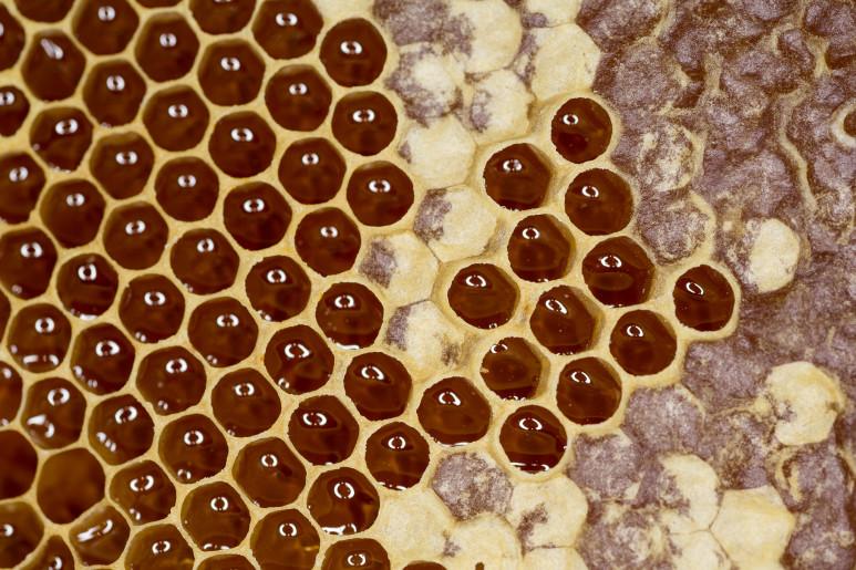Celle con Miele